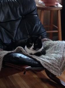 cat shawl